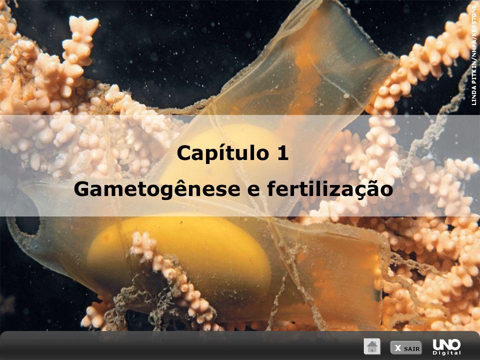 Gametogênese e fertilização