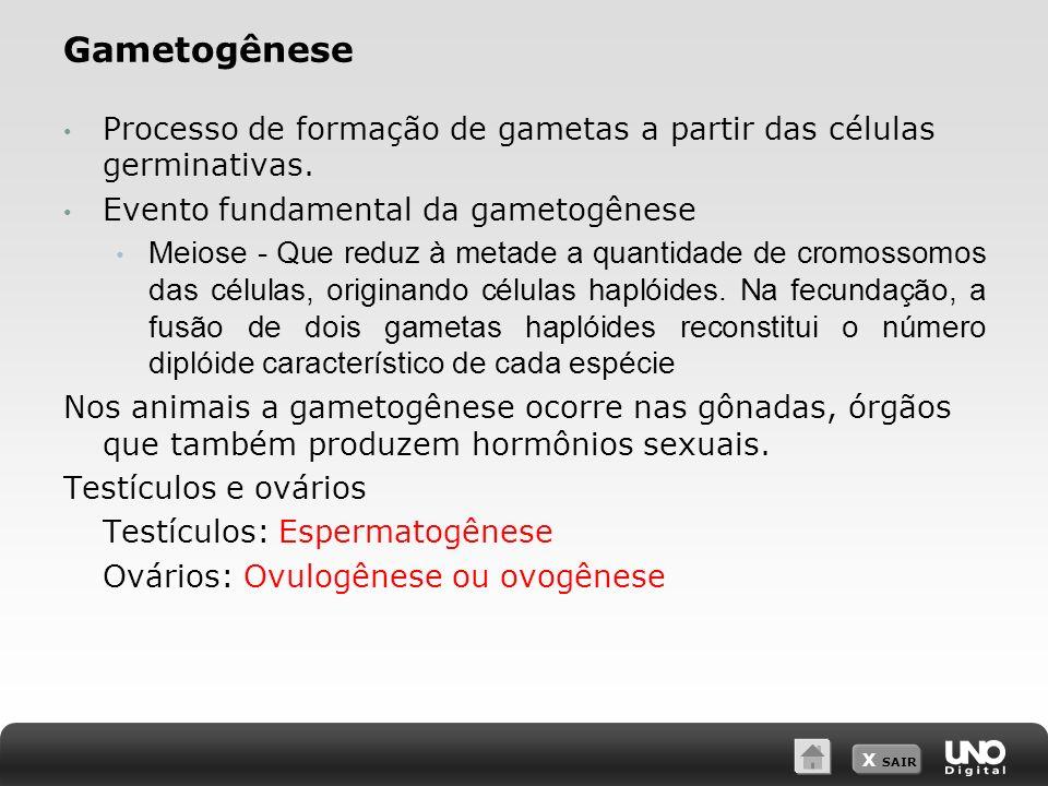 Gametogênese Processo de formação de gametas a partir das células germinativas. Evento fundamental da gametogênese.