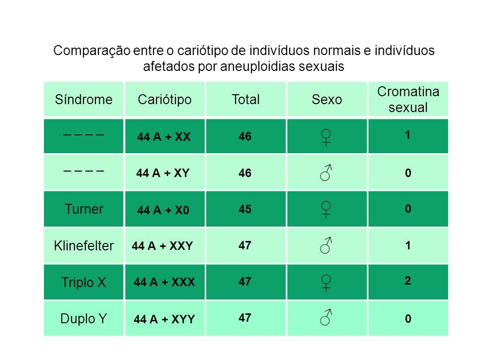 Comparação entre o cariótipo de indivíduos normais e indivíduos afetados por aneuploidias sexuais