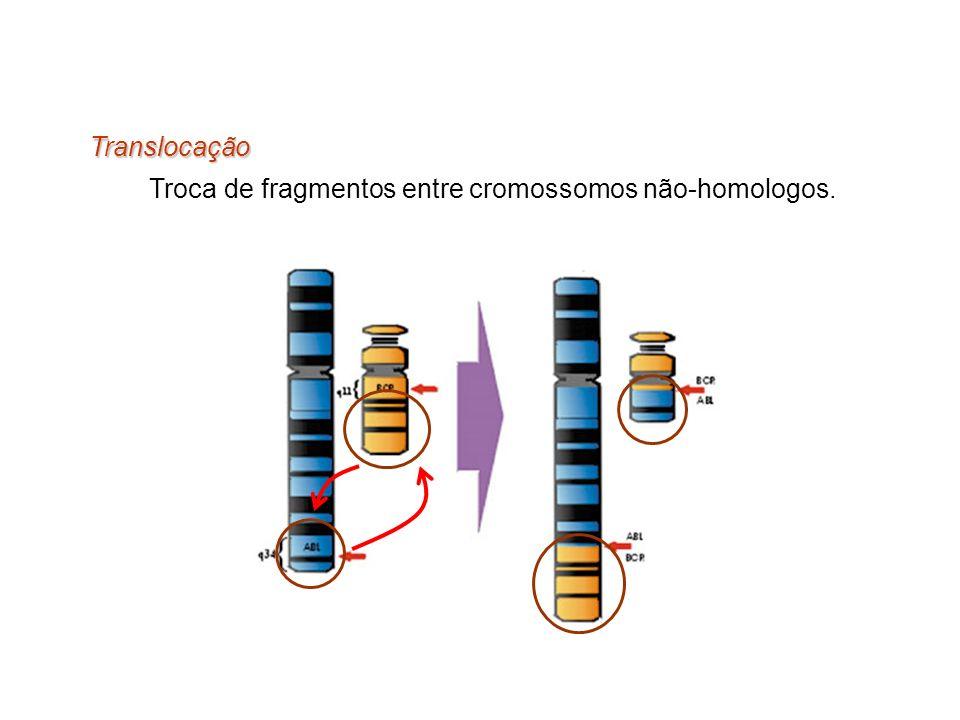 Translocação Troca de fragmentos entre cromossomos não-homologos.
