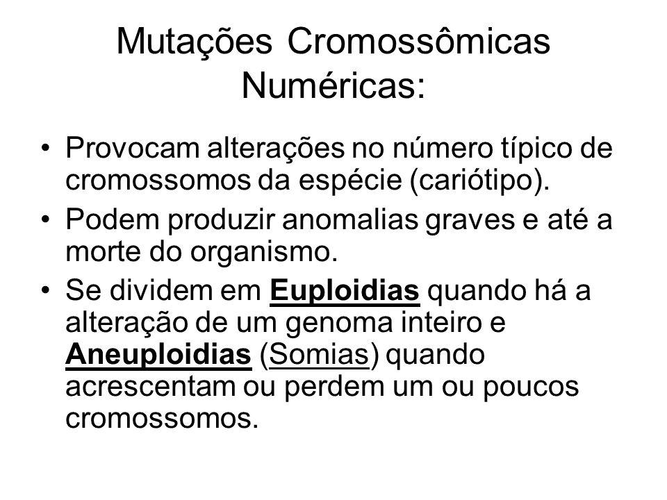 Mutações Cromossômicas Numéricas: