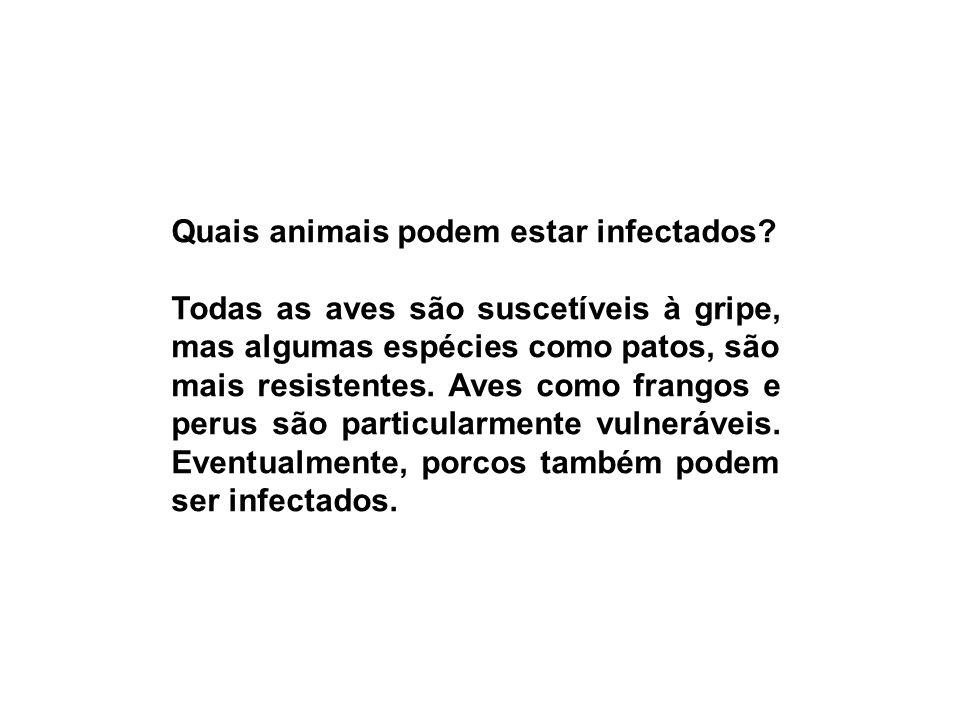 Quais animais podem estar infectados