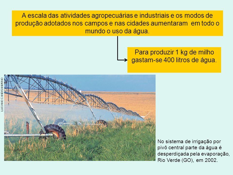 Para produzir 1 kg de milho gastam-se 400 litros de água.
