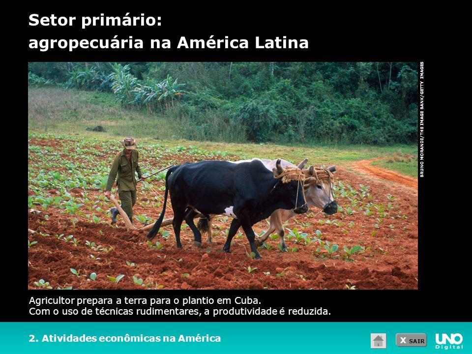 Setor primário: agropecuária na América Latina