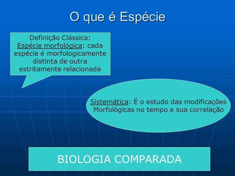 O que é Espécie BIOLOGIA COMPARADA Definição Clássica: