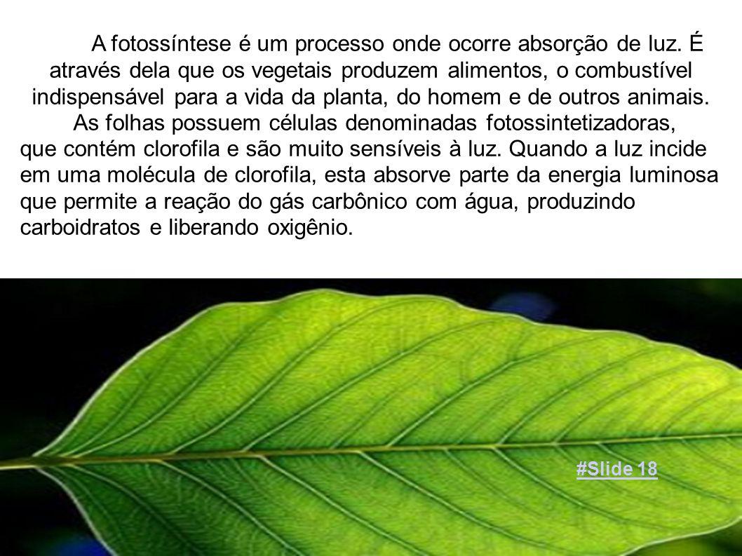 A fotossíntese é um processo onde ocorre absorção de luz