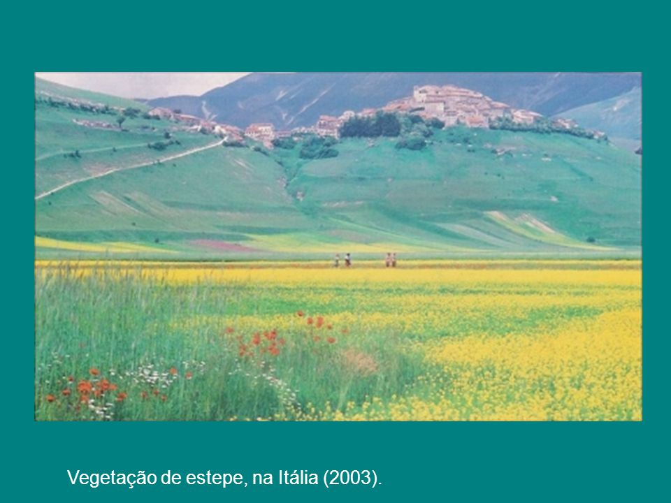 Vegetação de estepe, na Itália (2003).