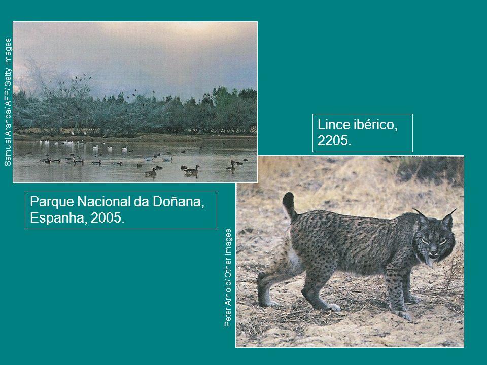 Parque Nacional da Doñana, Espanha, 2005.