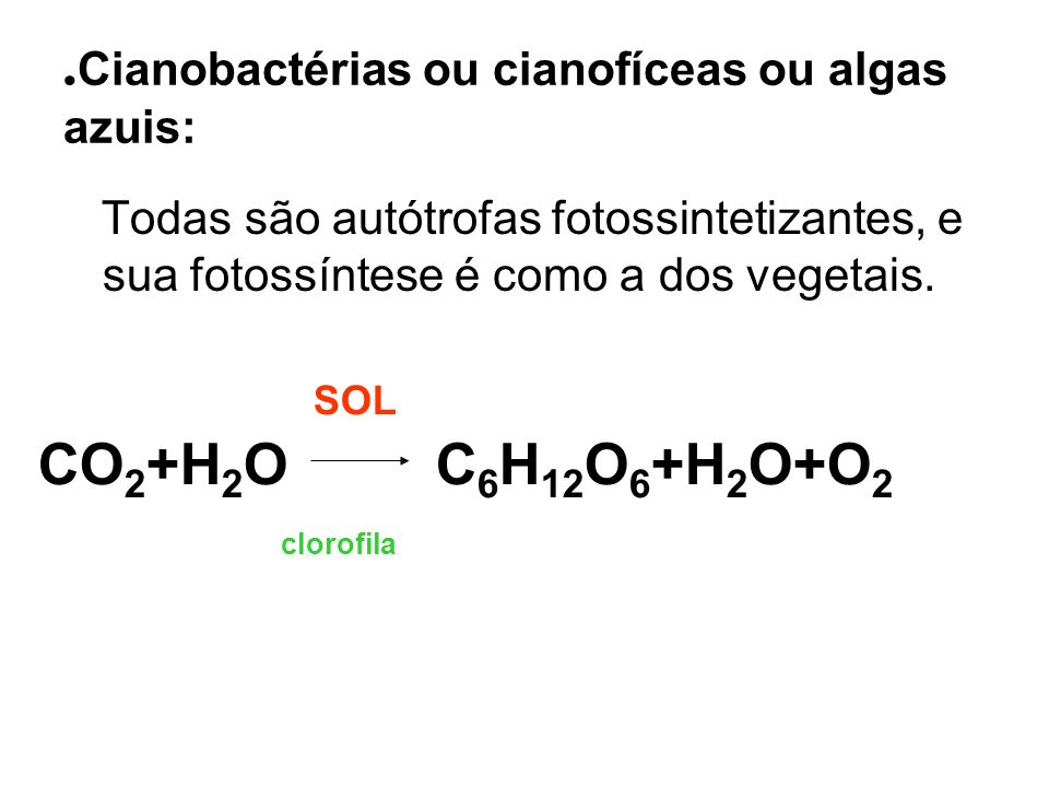 .Cianobactérias ou cianofíceas ou algas azuis: