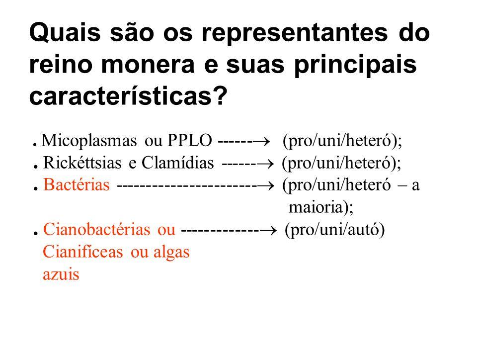 Quais são os representantes do reino monera e suas principais características