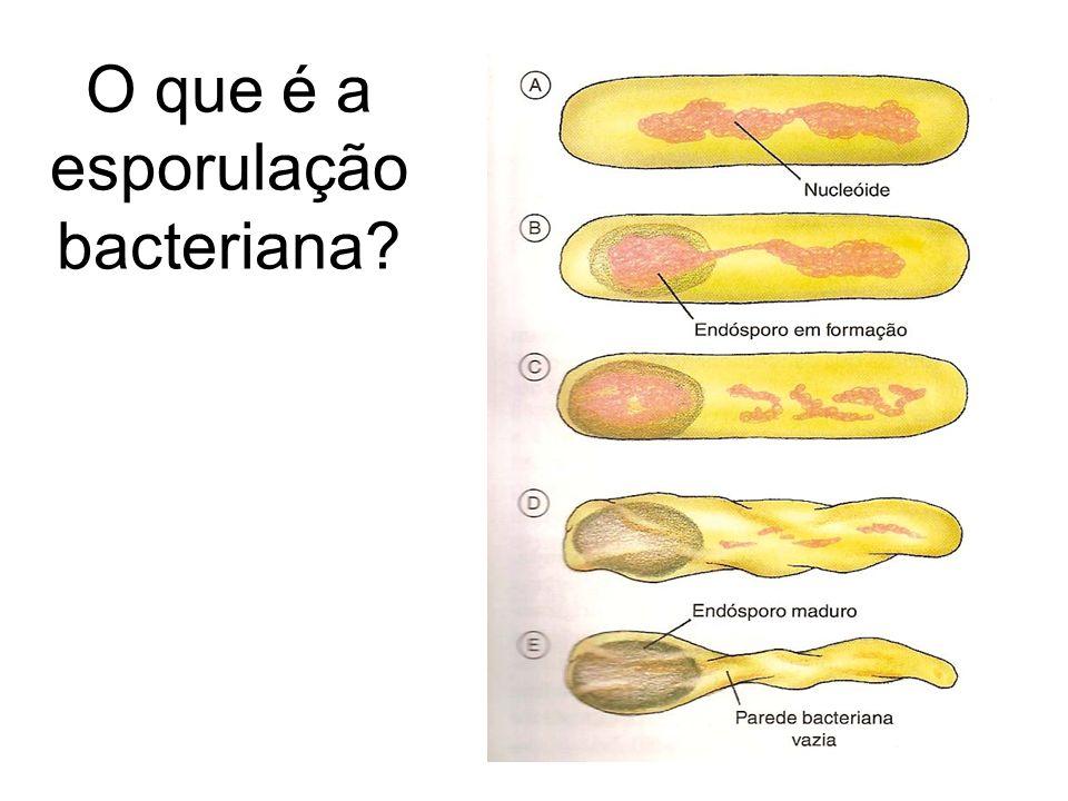 O que é a esporulação bacteriana