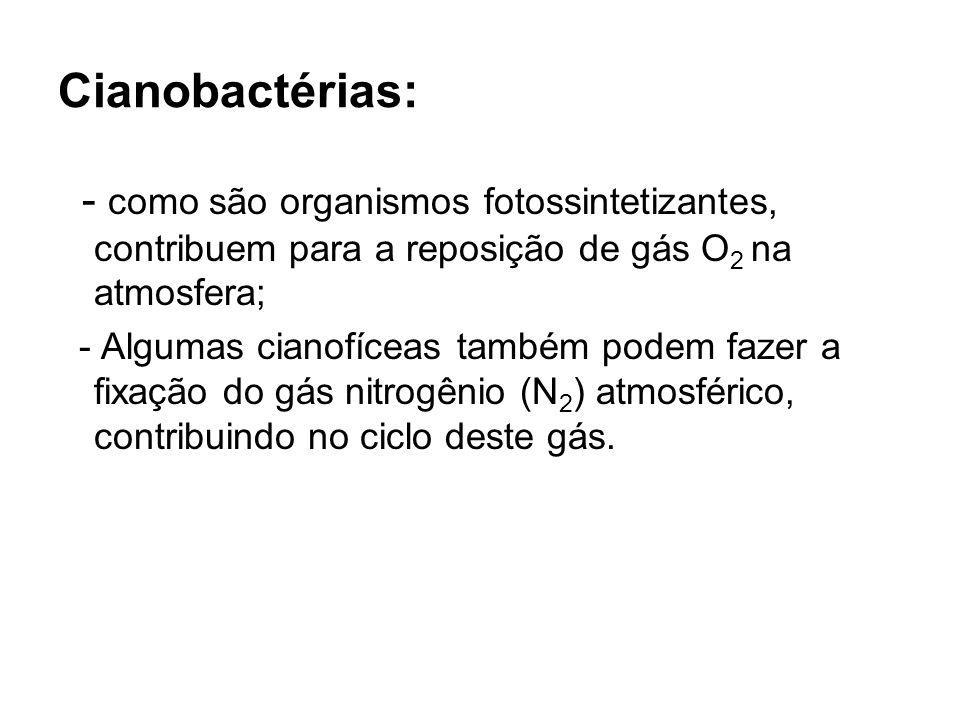 Cianobactérias:- como são organismos fotossintetizantes, contribuem para a reposição de gás O2 na atmosfera;