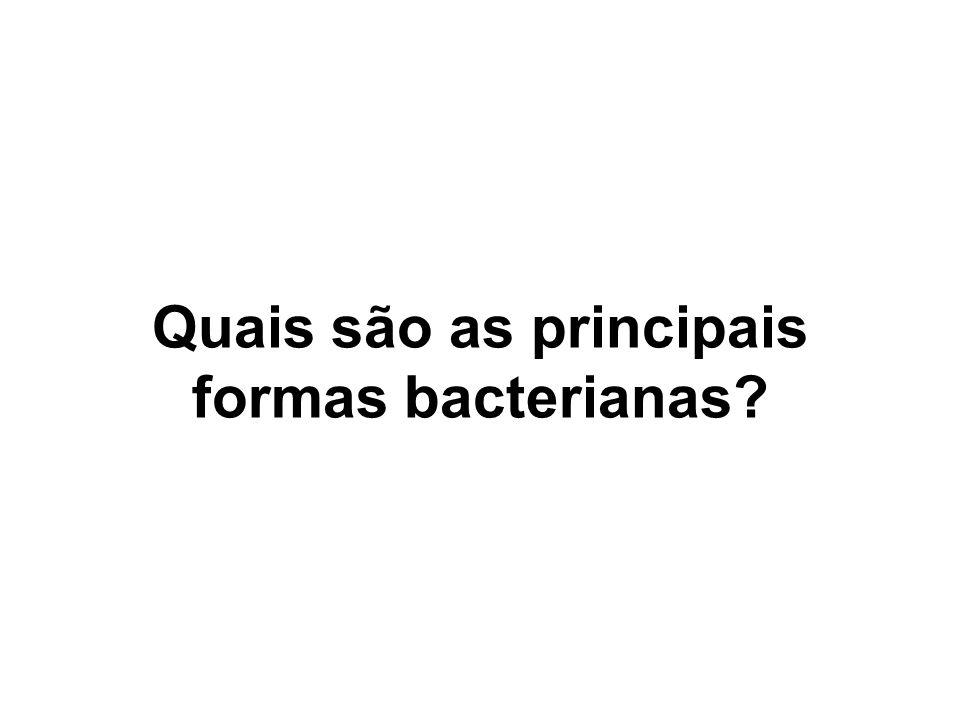 Quais são as principais formas bacterianas