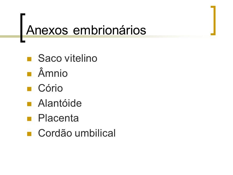 Anexos embrionários Saco vitelino Âmnio Cório Alantóide Placenta