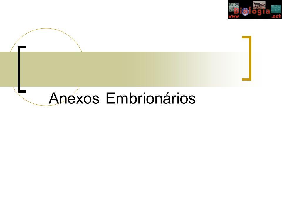 Anexos Embrionários