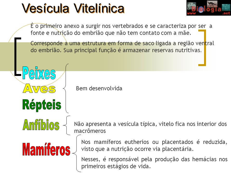 Vesícula Vitelínica Peixes Aves Répteis Anfíbios Mamíferos