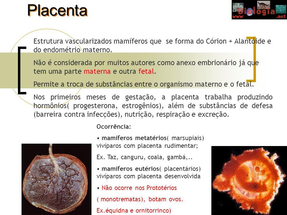 Placenta Estrutura vascularizados mamíferos que se forma do Córion + Alantóide e do endométrio materno.