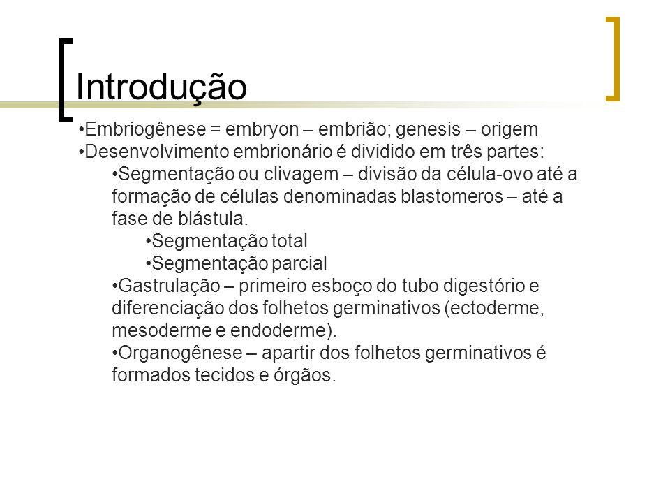 Introdução Embriogênese = embryon – embrião; genesis – origem