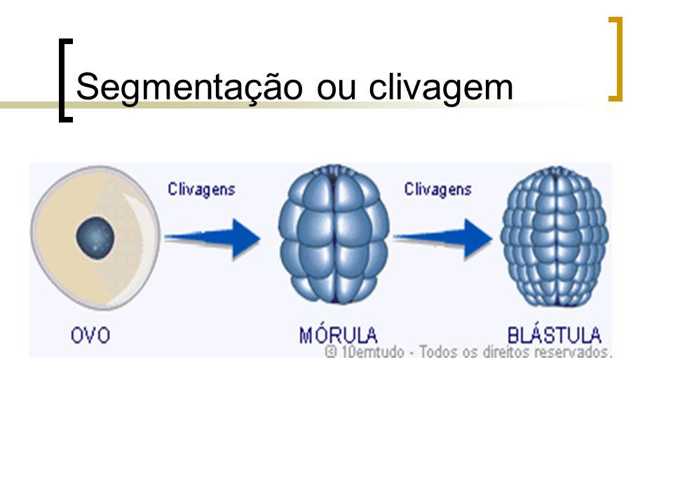 Segmentação ou clivagem