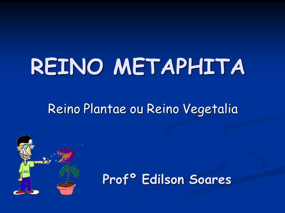 Reino Plantae ou Reino Vegetalia