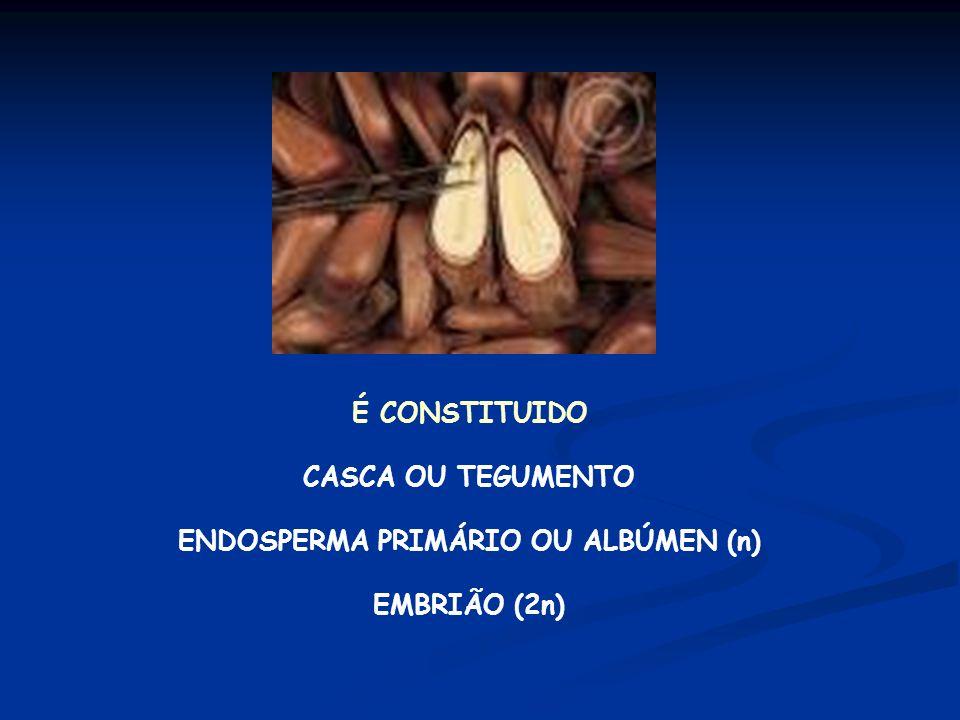 ENDOSPERMA PRIMÁRIO OU ALBÚMEN (n)