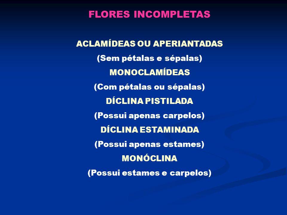 FLORES INCOMPLETAS ACLAMÍDEAS OU APERIANTADAS (Sem pétalas e sépalas)