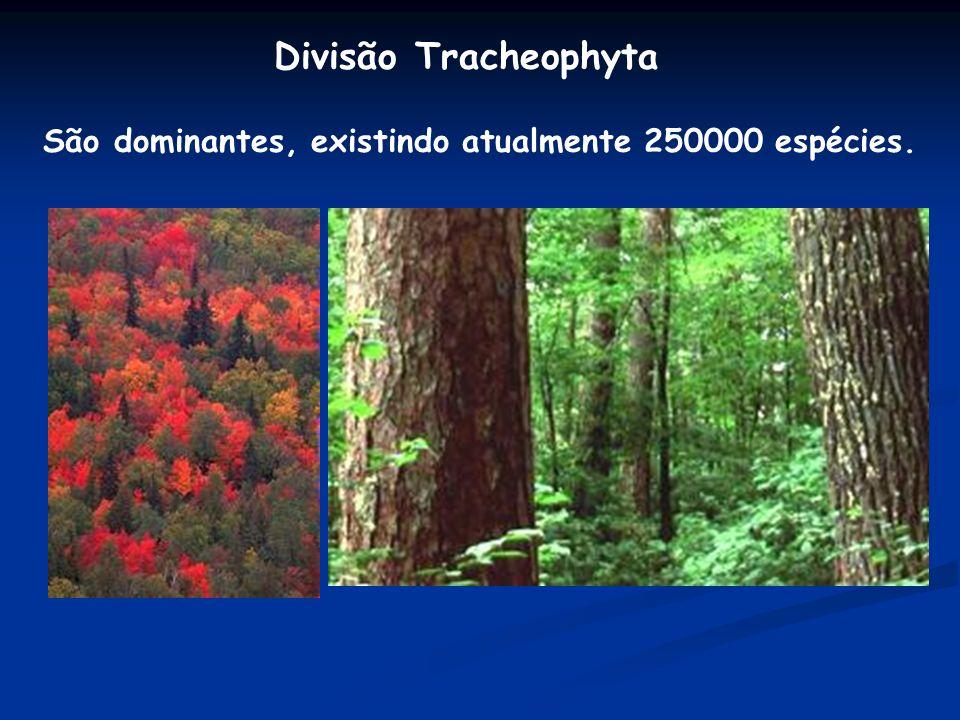 São dominantes, existindo atualmente 250000 espécies.