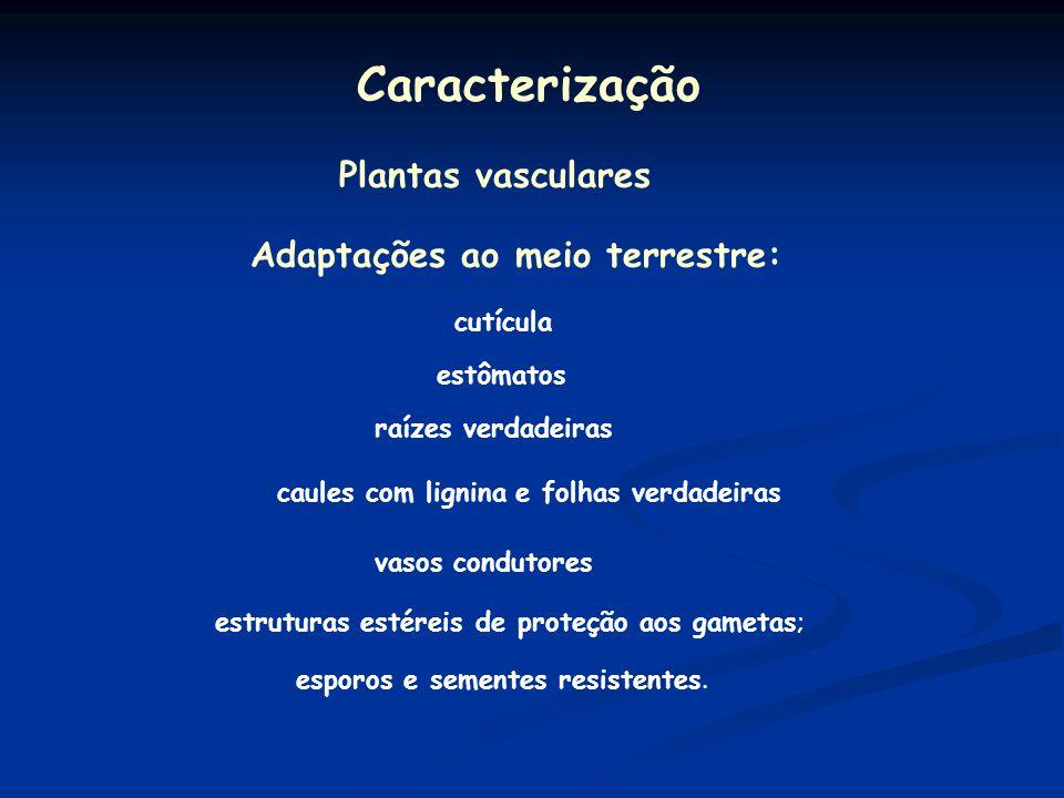 Caracterização Plantas vasculares Adaptações ao meio terrestre: