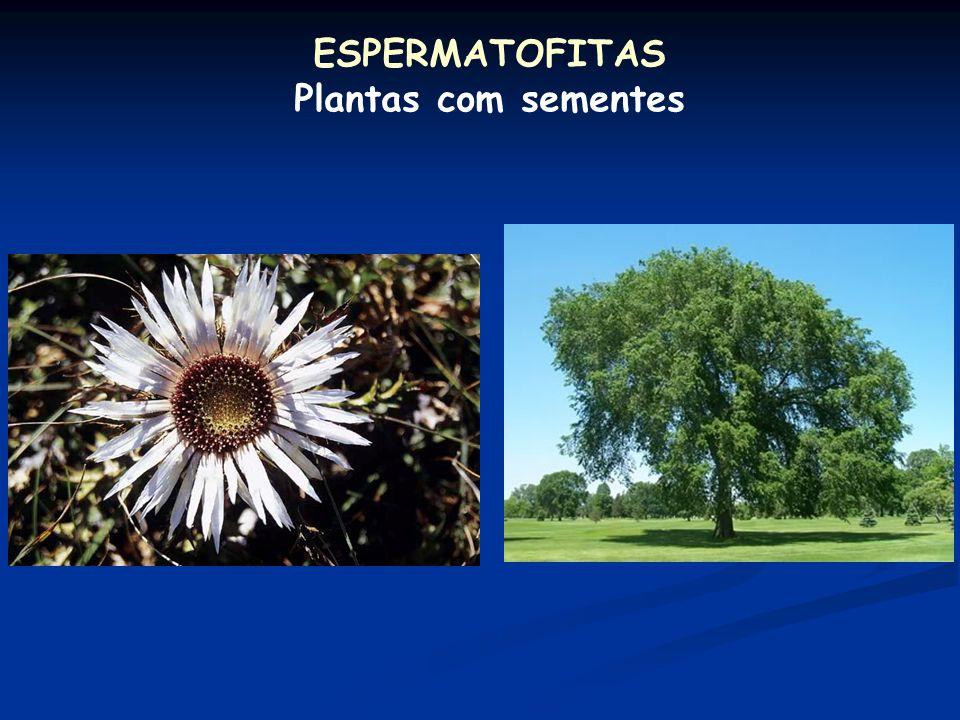 ESPERMATOFITAS Plantas com sementes