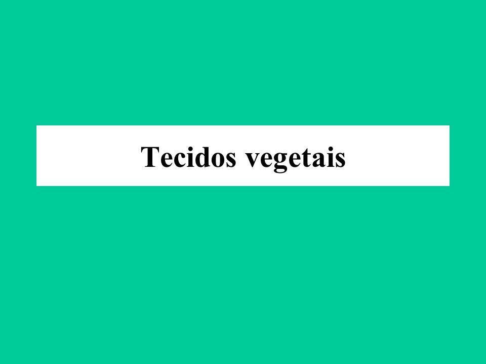 Tecidos vegetais
