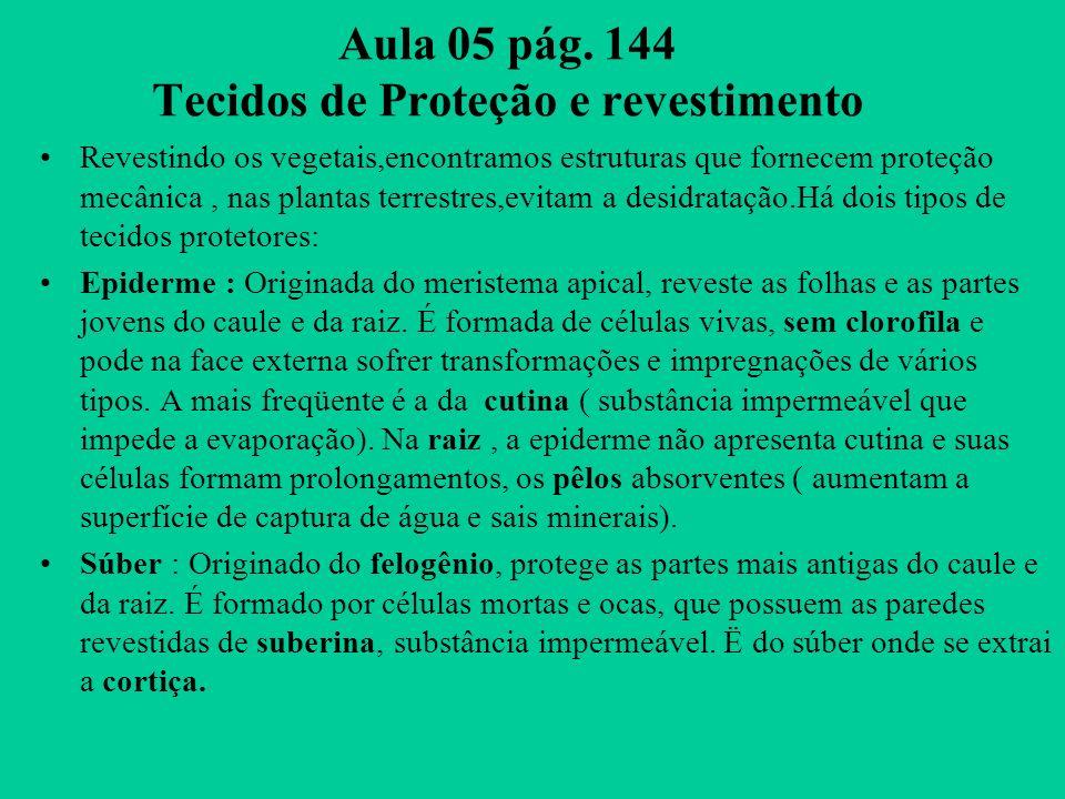 Aula 05 pág. 144 Tecidos de Proteção e revestimento