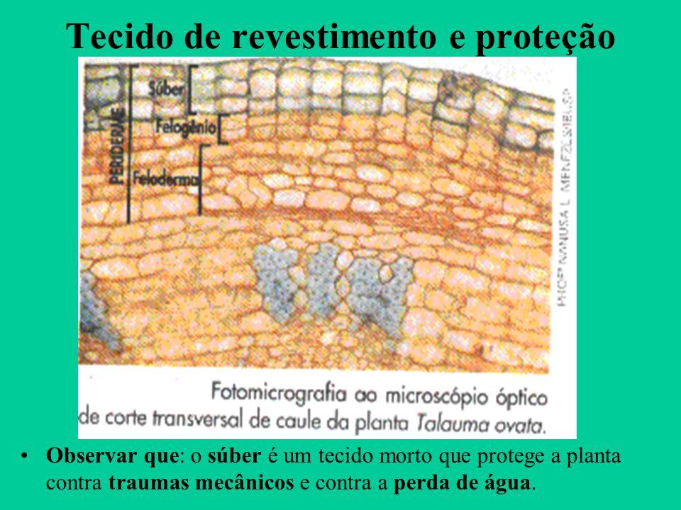 Tecido de revestimento e proteção