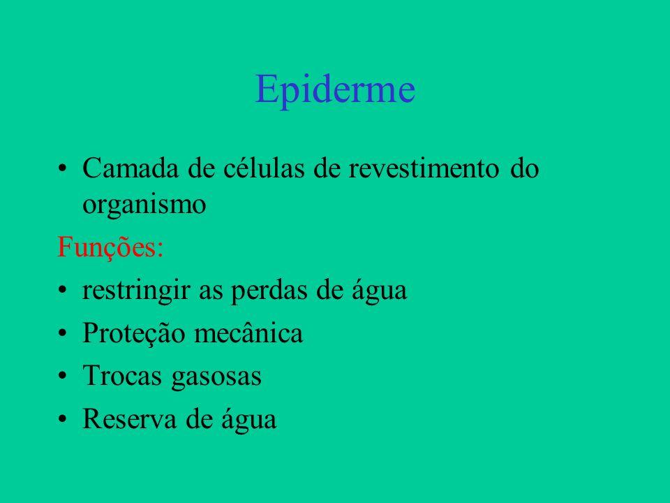 Epiderme Camada de células de revestimento do organismo Funções: