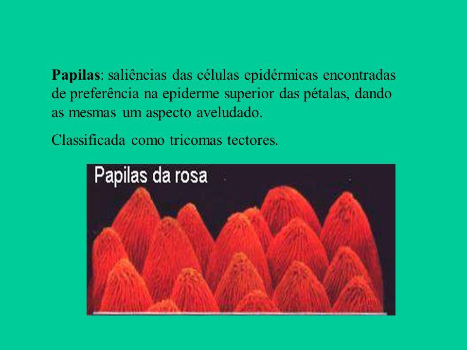 Papilas: saliências das células epidérmicas encontradas de preferência na epiderme superior das pétalas, dando as mesmas um aspecto aveludado.