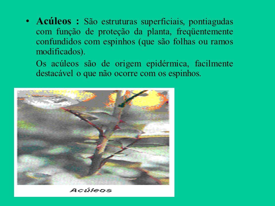 Acúleos : São estruturas superficiais, pontiagudas com função de proteção da planta, freqüentemente confundidos com espinhos (que são folhas ou ramos modificados).