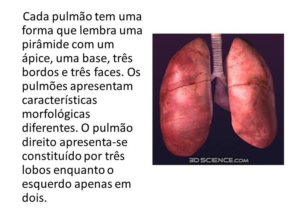 Cada pulmão tem uma forma que lembra uma pirâmide com um ápice, uma base, três bordos e três faces.
