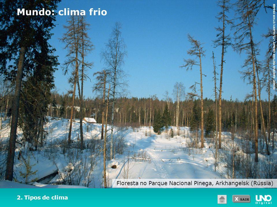 Floresta no Parque Nacional Pinega, Arkhangelsk (Rússia)