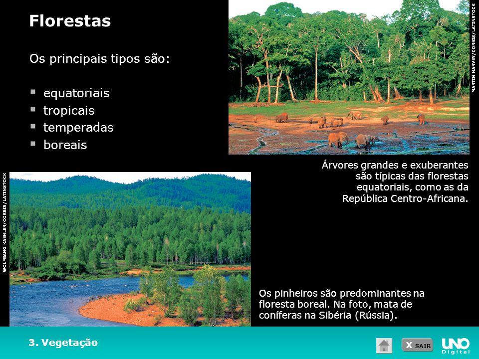 Florestas Os principais tipos são: equatoriais tropicais temperadas