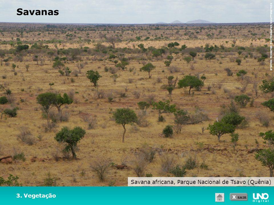 Savana africana, Parque Nacional de Tsavo (Quênia)