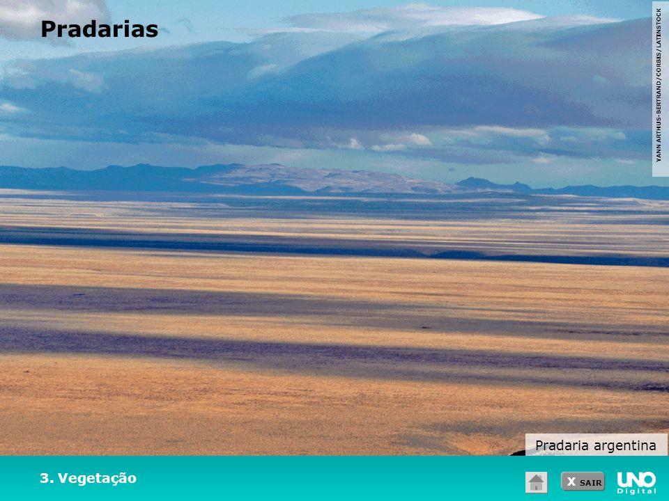 Pradarias Pradaria argentina 3. Vegetação