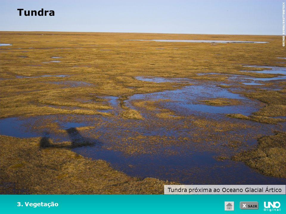 Tundra próxima ao Oceano Glacial Ártico