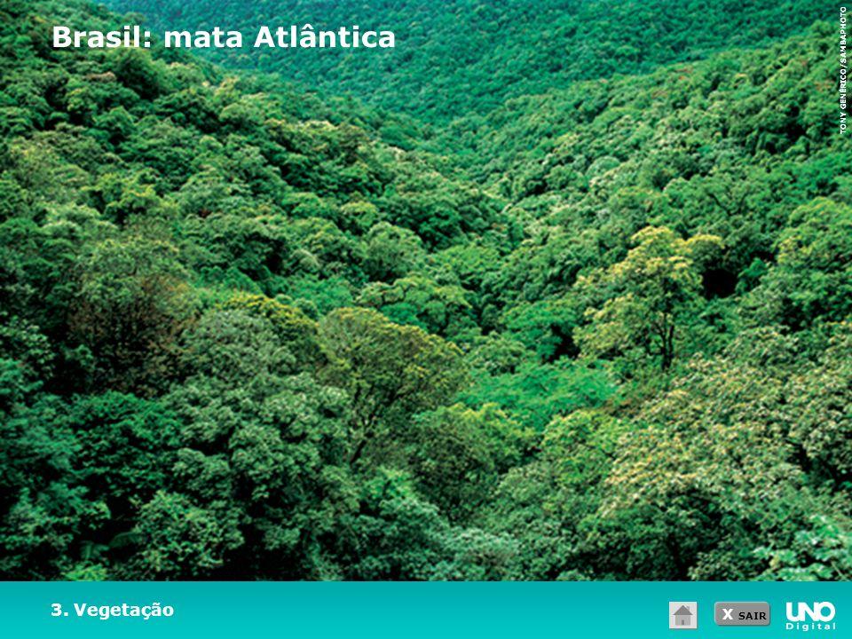 Brasil: mata Atlântica