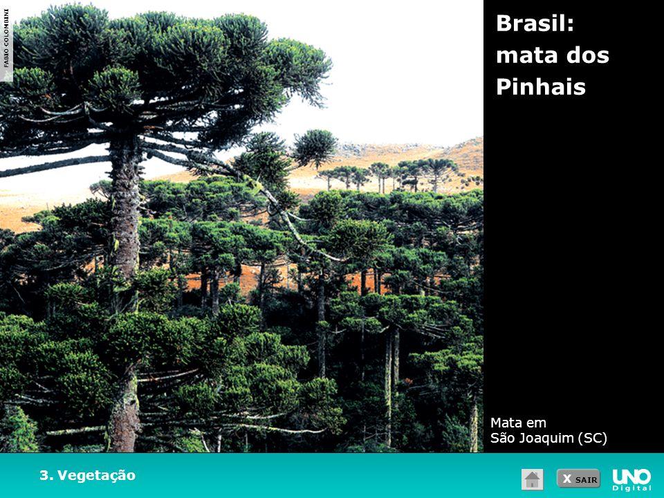 Brasil: mata dos Pinhais