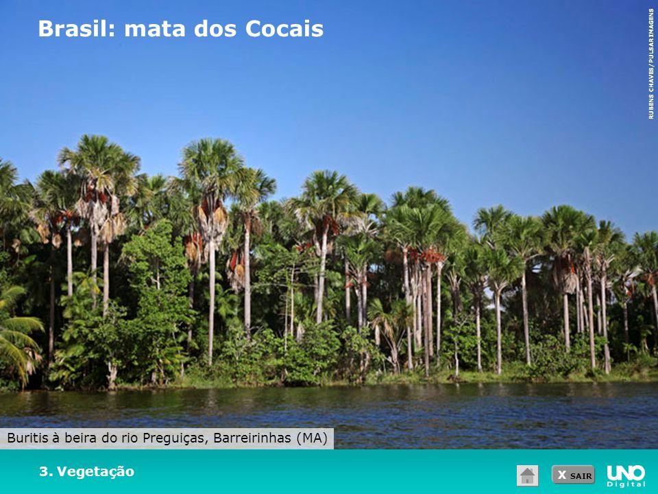 Brasil: mata dos Cocais