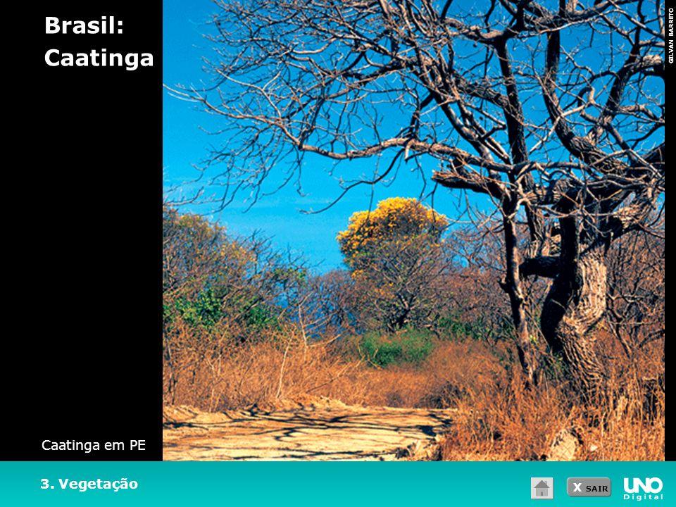 Brasil: Caatinga Caatinga em PE 3. Vegetação