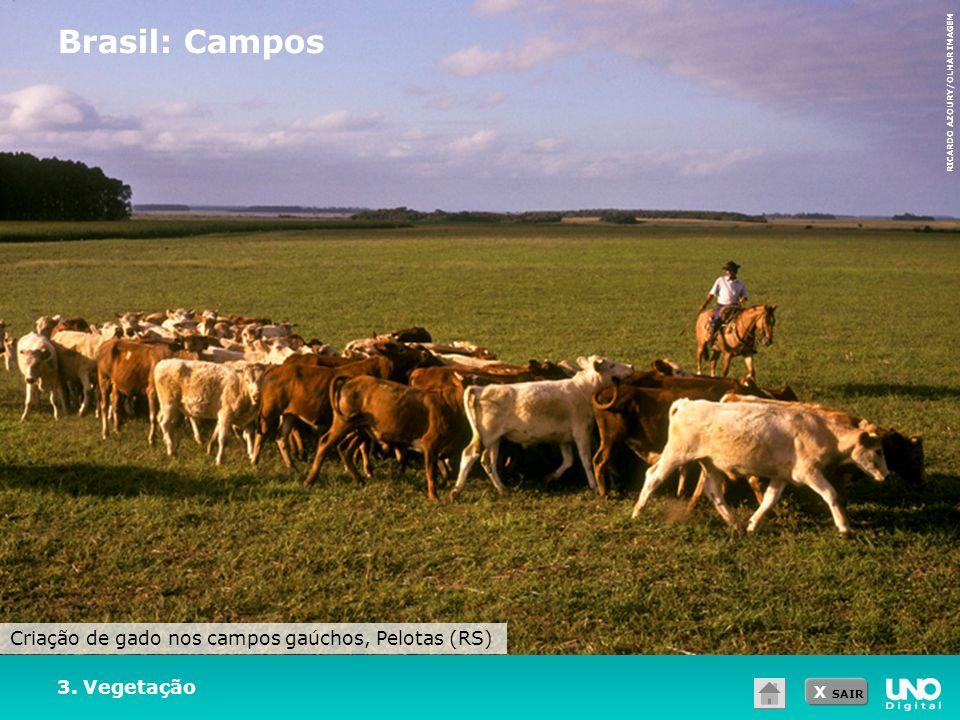Brasil: Campos Criação de gado nos campos gaúchos, Pelotas (RS)