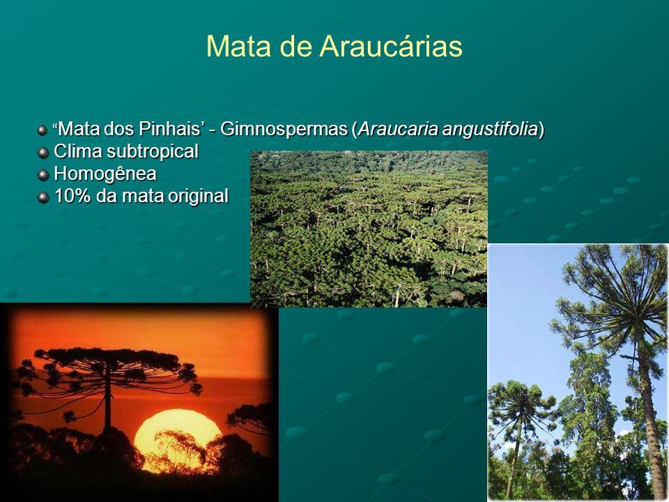 Mata de Araucárias Clima subtropical Homogênea 10% da mata original