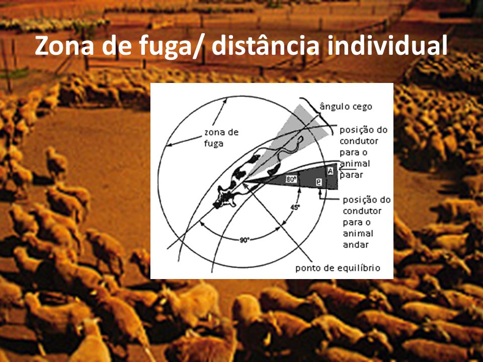 Zona de fuga/ distância individual