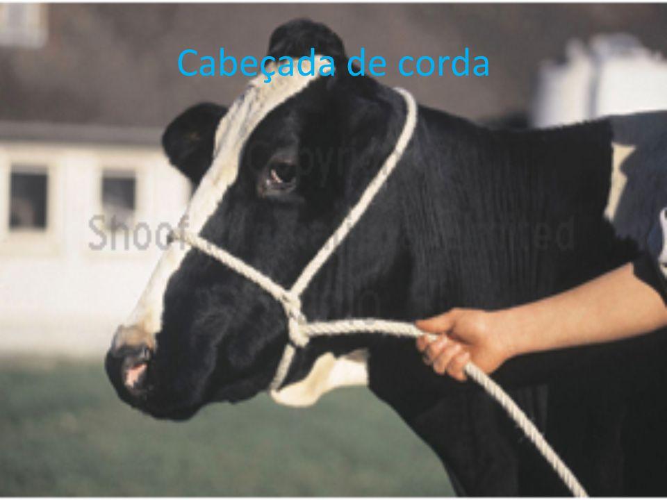 Cabeçada de corda