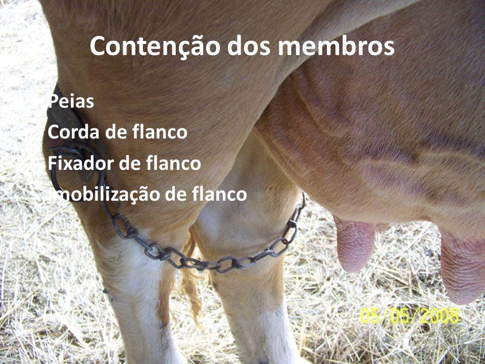 Contenção dos membros Peias Corda de flanco Fixador de flanco